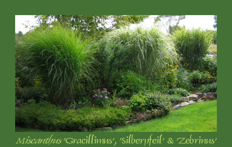 Ornamental grasses their companions 2 workwithnaturefo
