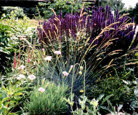 Purple Perennials Their Companions 2